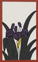 菖蒲のカス